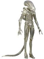 Alien - Xenomorph (Translucent) - S07
