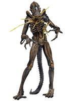 Alien - Battle Damaged Warrior Brown - S12