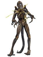 Alien - Battle Damaged Warrior Brown - S12